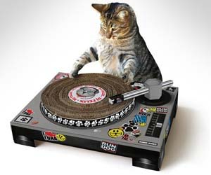 cat-scratch-dj-turntable