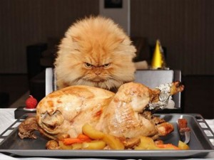 funny-thanksgiving-pictures-23